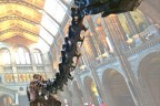 Dippy at NHM London