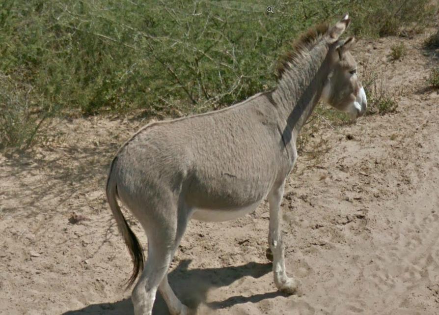 Google Street View Botswana Donkey