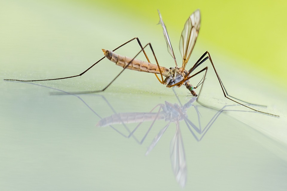 mosquitoes pesticides