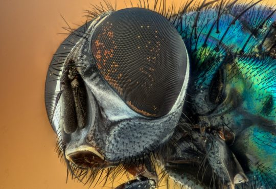 military insects ai biomimicry
