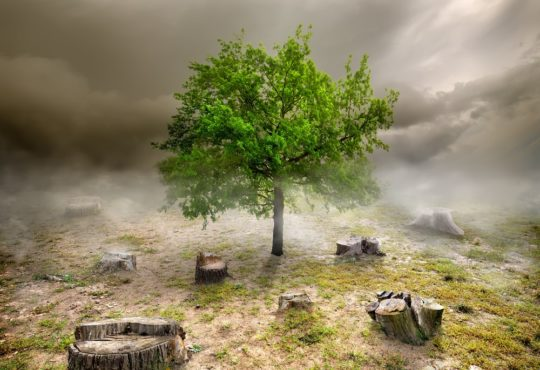 deforestation, Green tree among the stumps in cloudy day