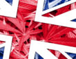 United Kingdom Flag on cannabis background. Drug policy. Legalization of marijuana
