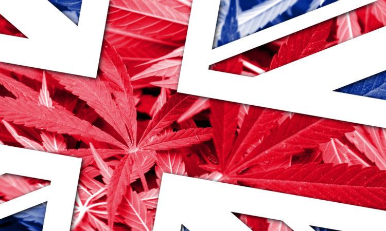 United Kingdom Flag on cannabis background. Drug policy. Legalization of marijuana