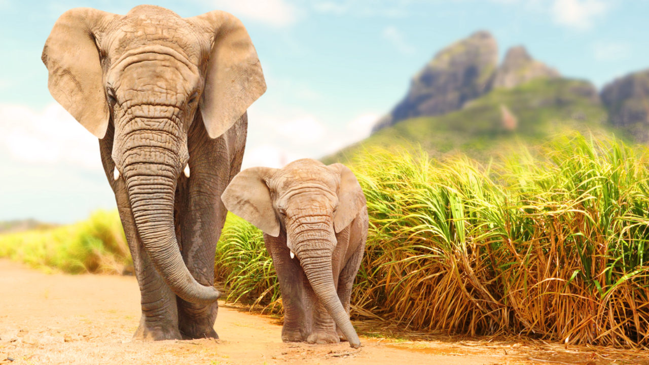 360+ ELEPHANTS DIED UNDER MYSTERIOUS CIRCUMSTANCES