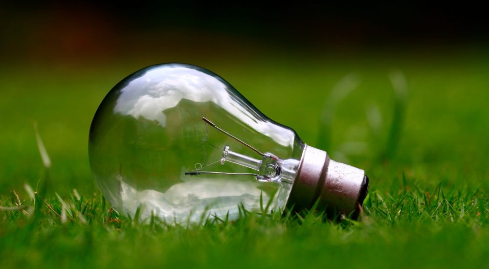 Light bulb on grass