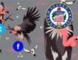 senate facebook twitter